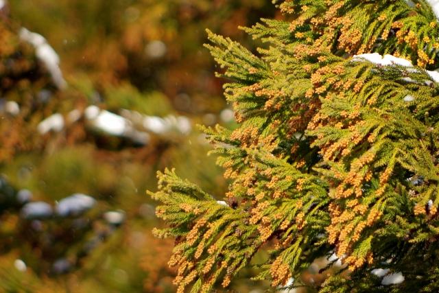 治ったはずの花粉症が復活? 富士吉田市 整体 自然体